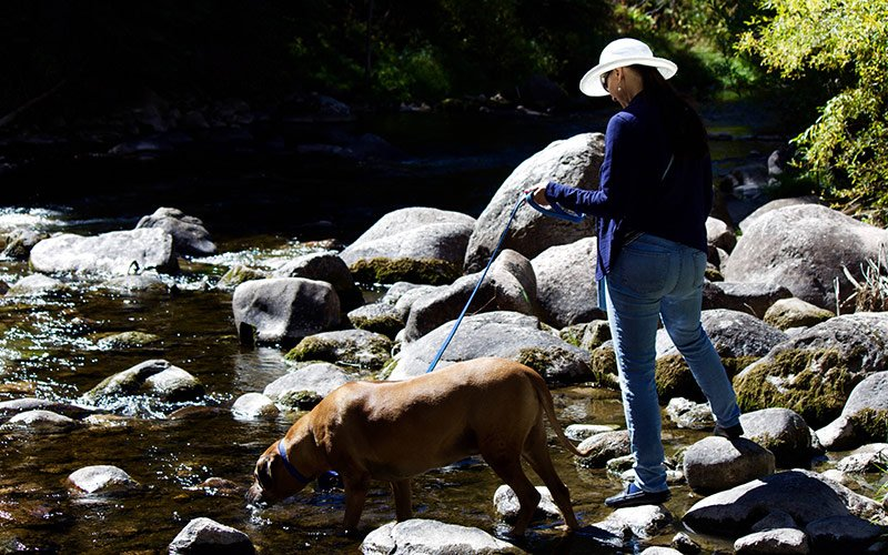 Pet friendly rentals for your vacation